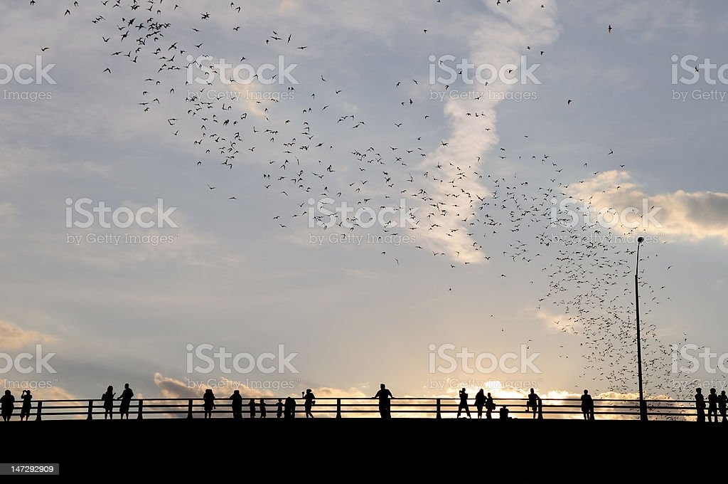 Bat Exodus stock photo