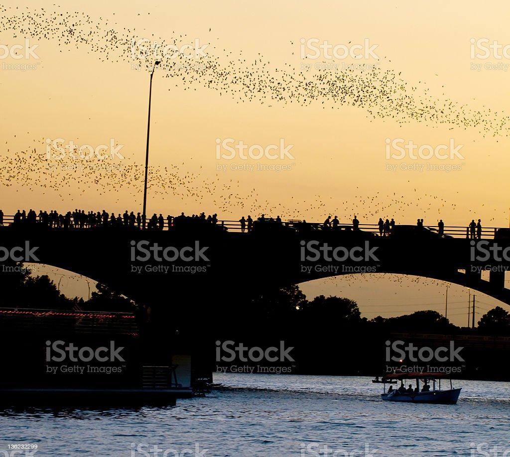 Bat Flight in Austin Texas stock photo