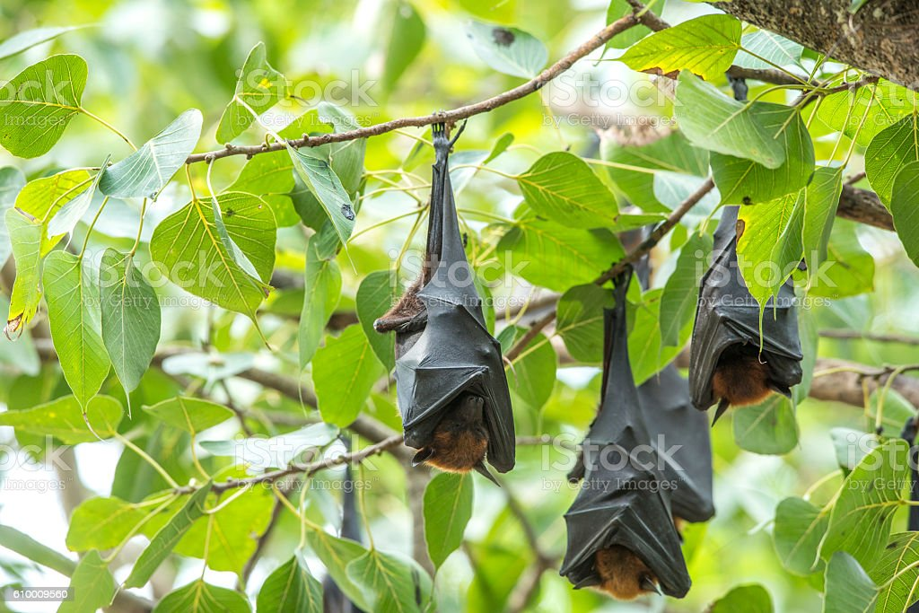 Bat suspension photo libre de droits