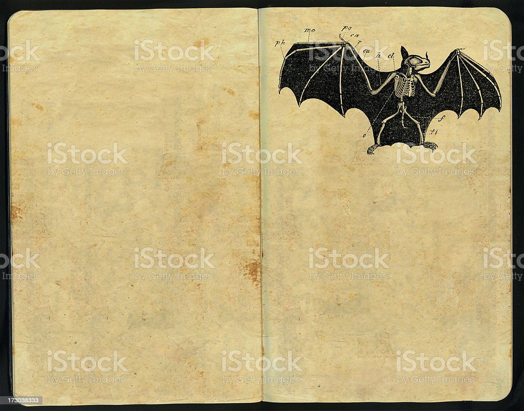 Bat morphology Sketch Pad stock photo