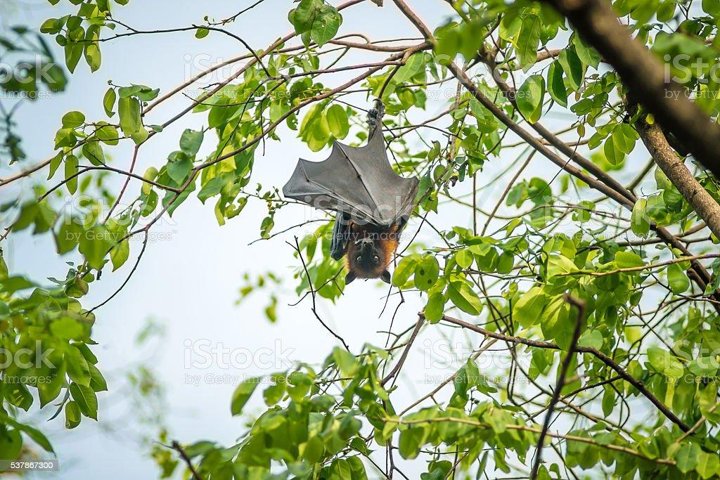 Bat on a tree stock photo