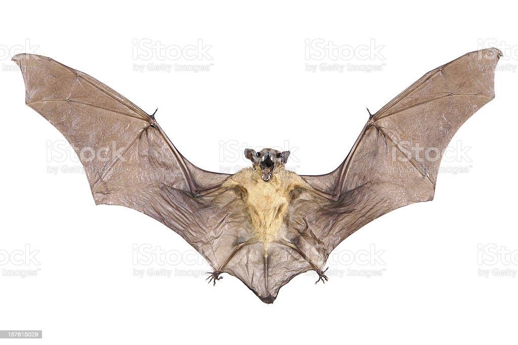 Bat royalty-free stock photo