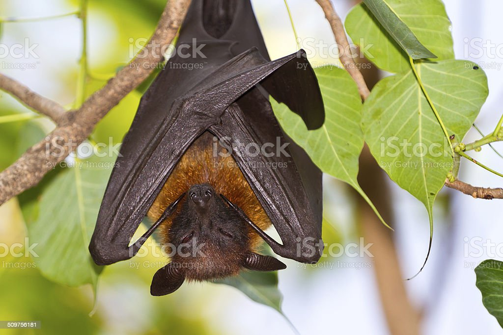 Bat. stock photo