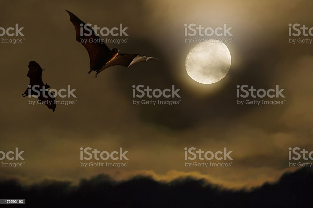 Bat silhouettes with full moon - Halloween festival stock photo