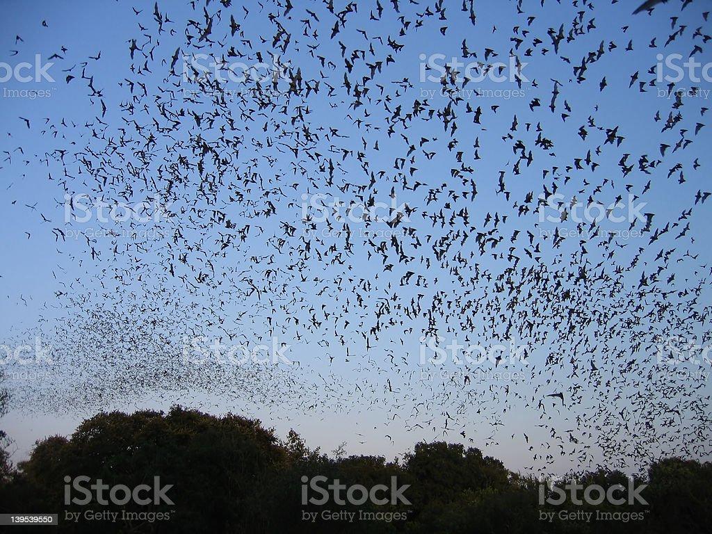 Bat Sky. stock photo