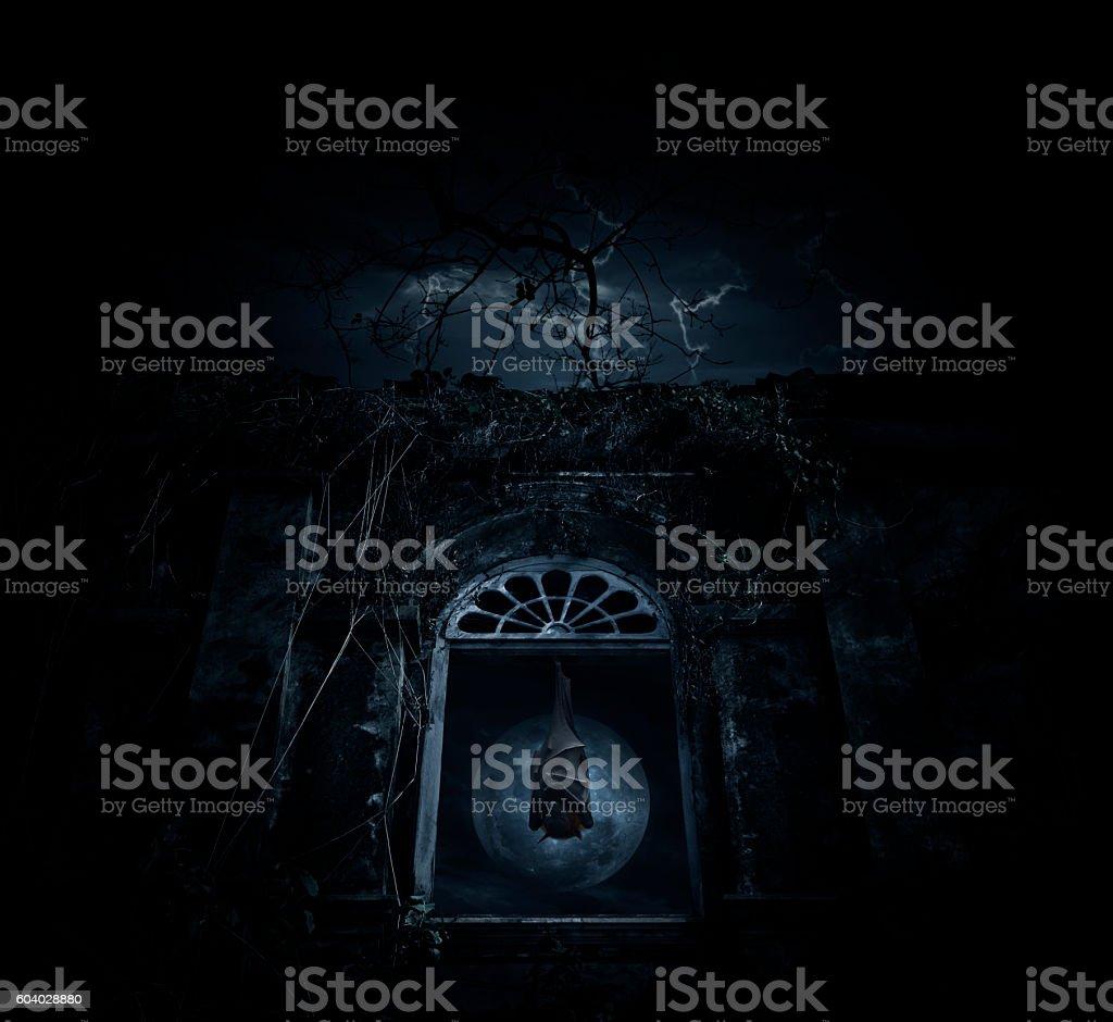 Bat sleep and hang on ancient window castle, Halloween concept stock photo