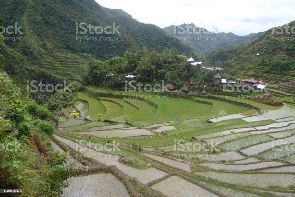 Batad stock photo