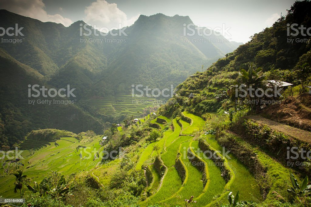 Batad Rice terraces stock photo