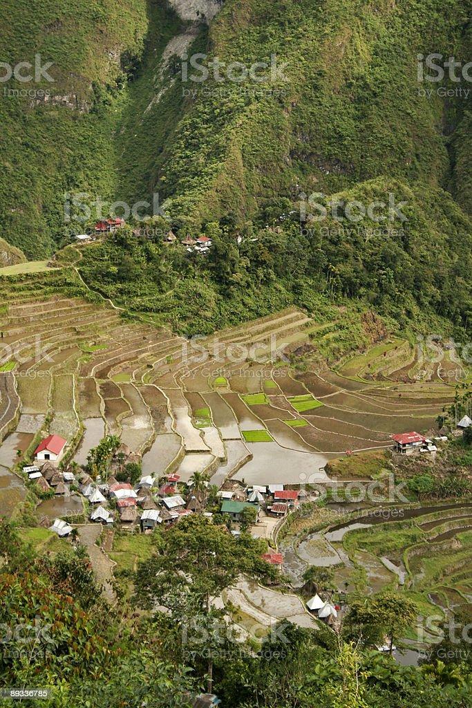 batad rice terraces royalty-free stock photo