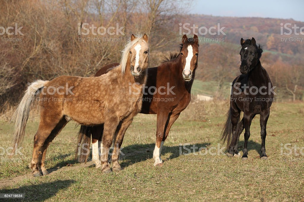 Batch of horses on autumn pasturage stock photo