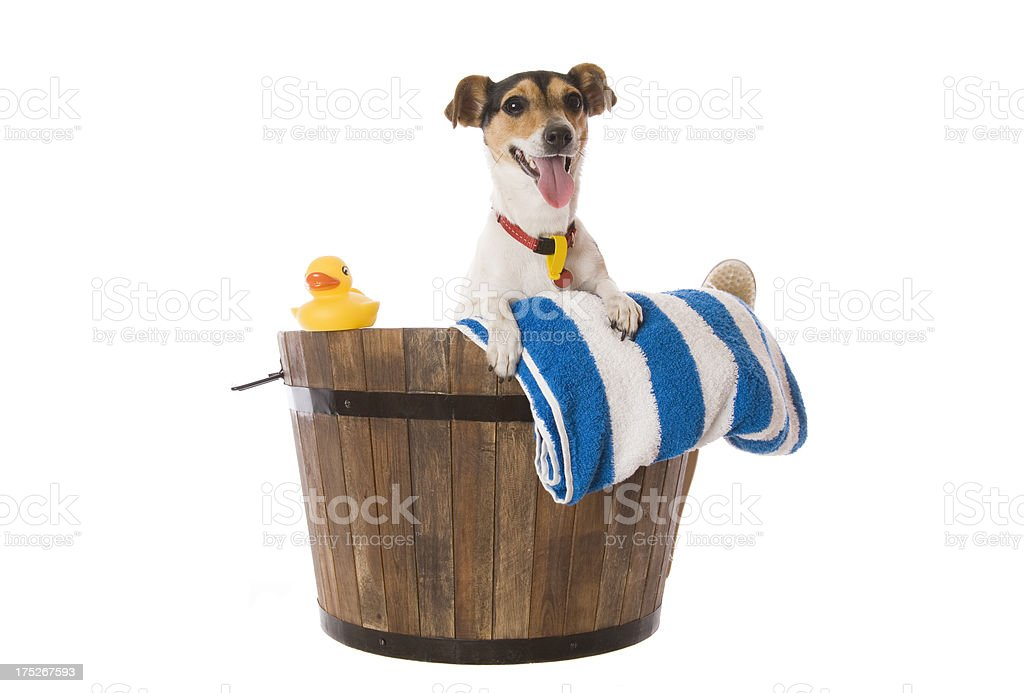 Bath for Dog royalty-free stock photo