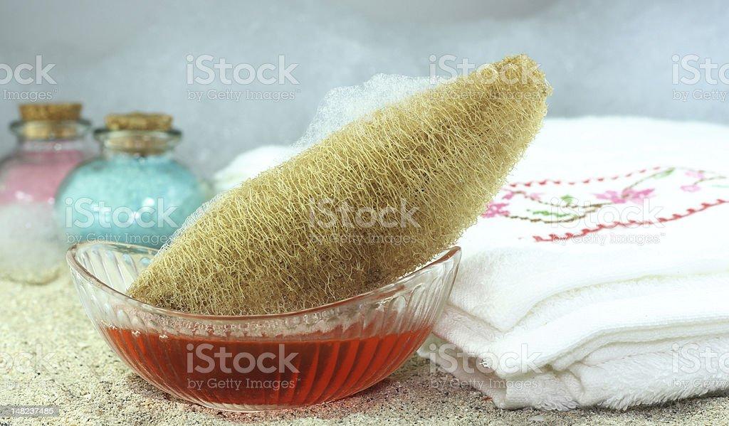 bath sponge plant stock photo