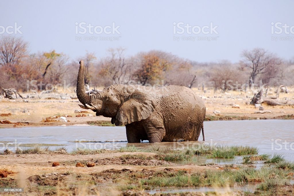 Bathing Elephant in a waterhole in the Etosha National Park in Namibia stock photo