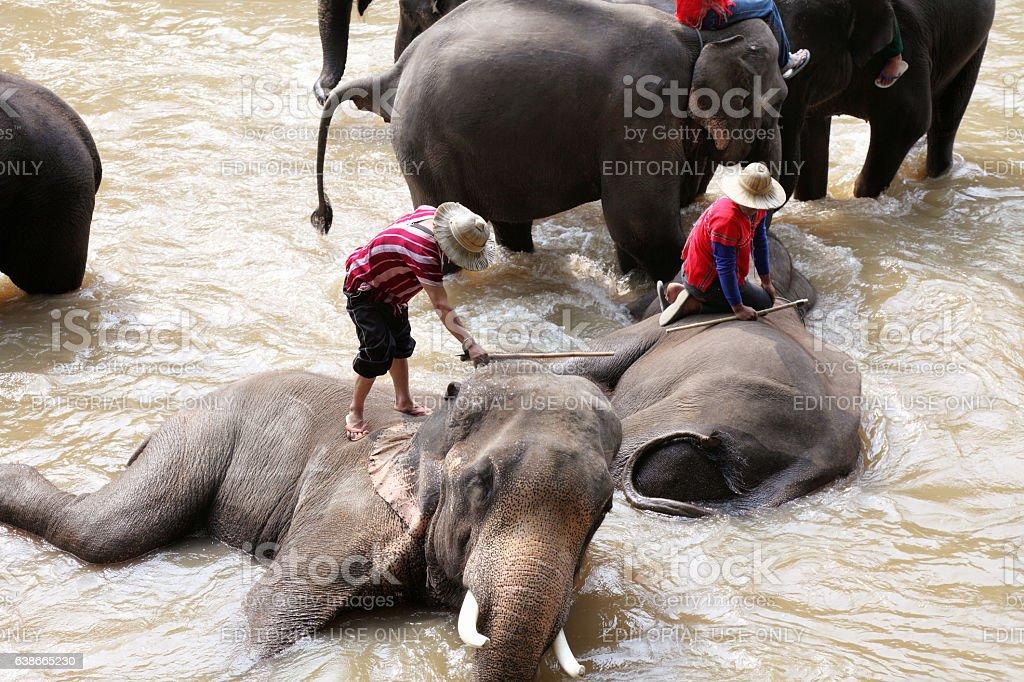 Bathing elephants stock photo