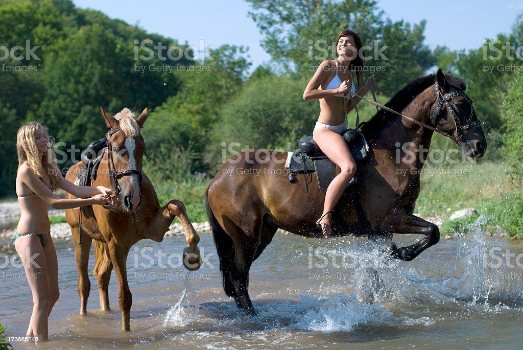 bathing horses stock photo