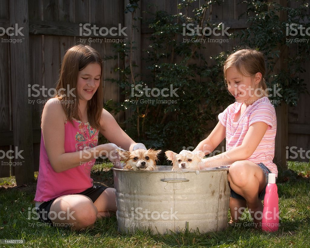 Bathing the Puppies royalty-free stock photo