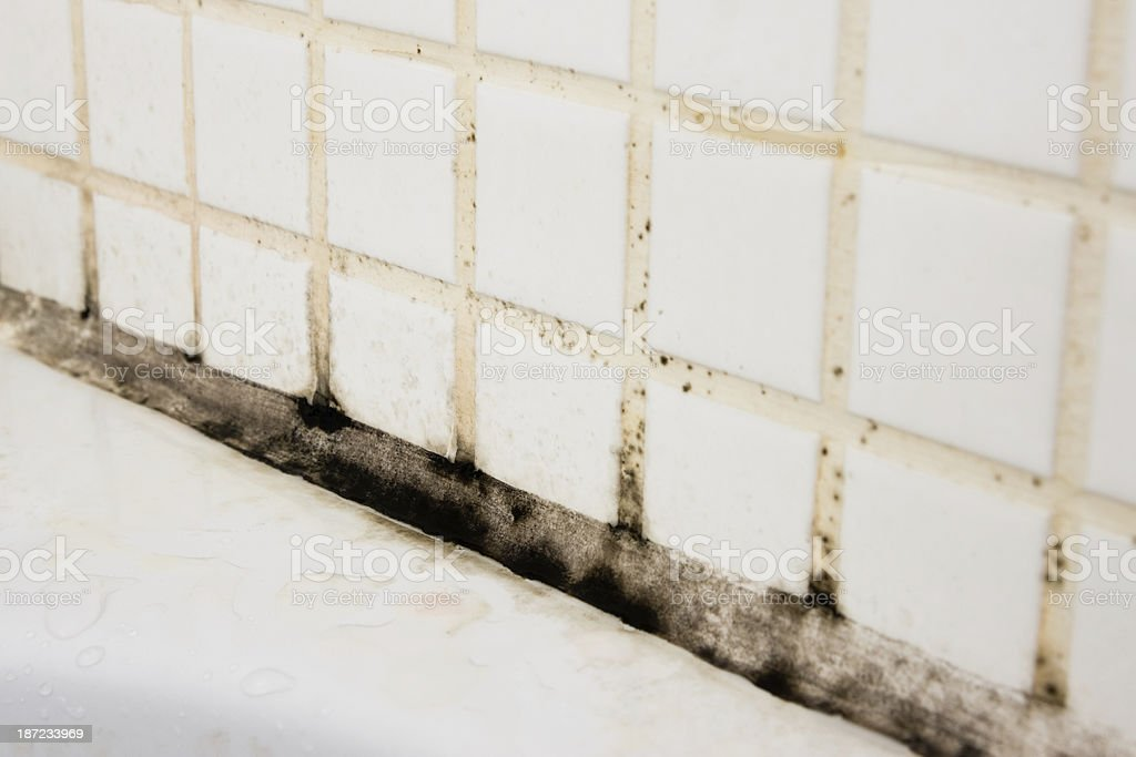 Bathroom dirt and mould on grouting and tiles royalty-free stock photo