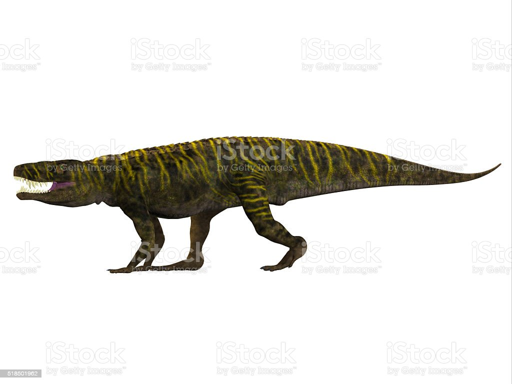 Batrachotomus Side Profile stock photo