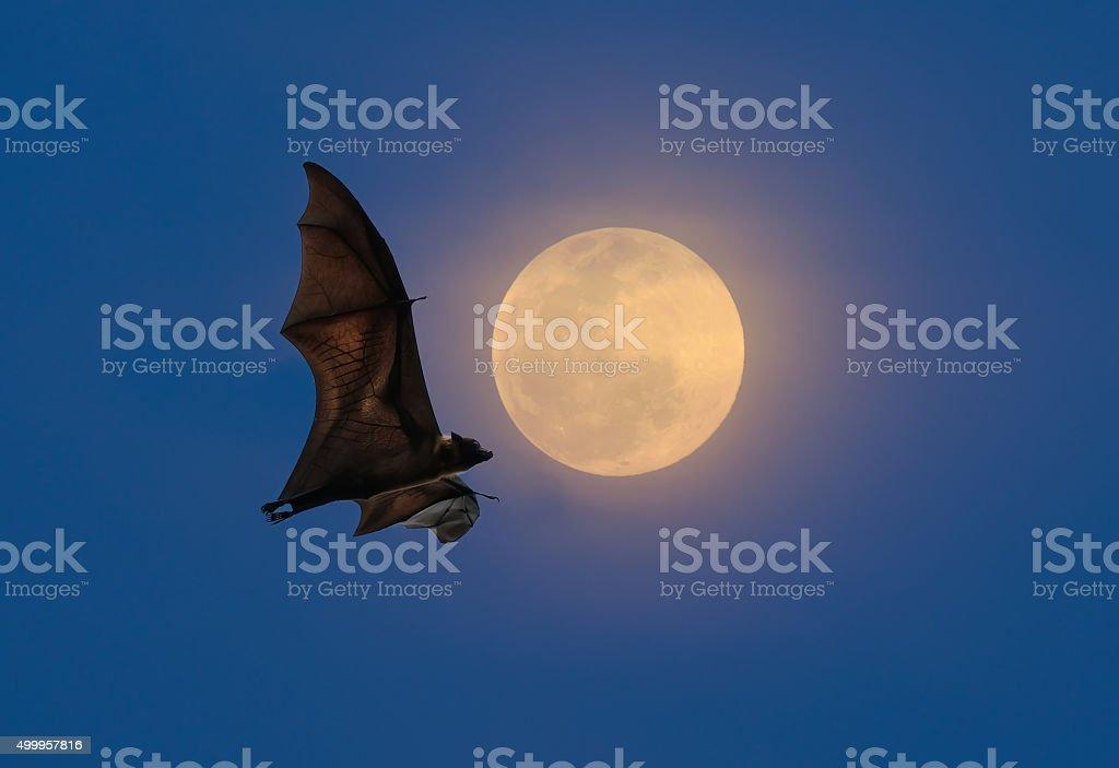 Bats flying at night stock photo