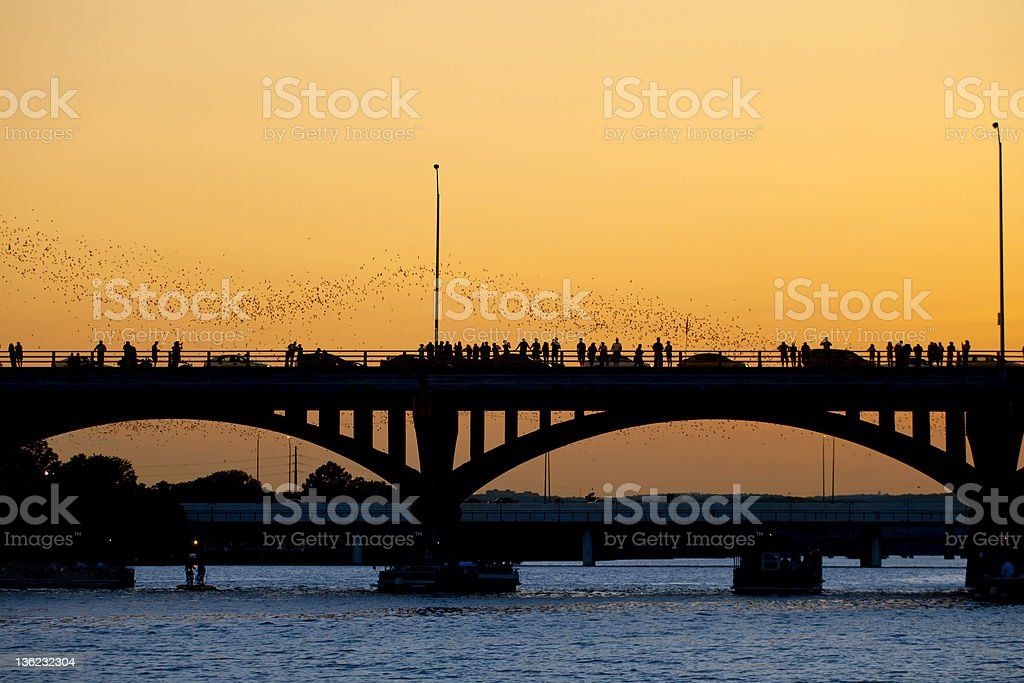 Bats flying from a bridge in Austin, Texas at sunset stock photo