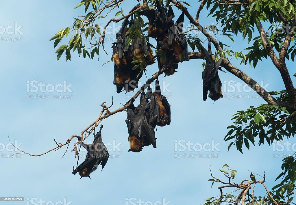 bats on tree stock photo