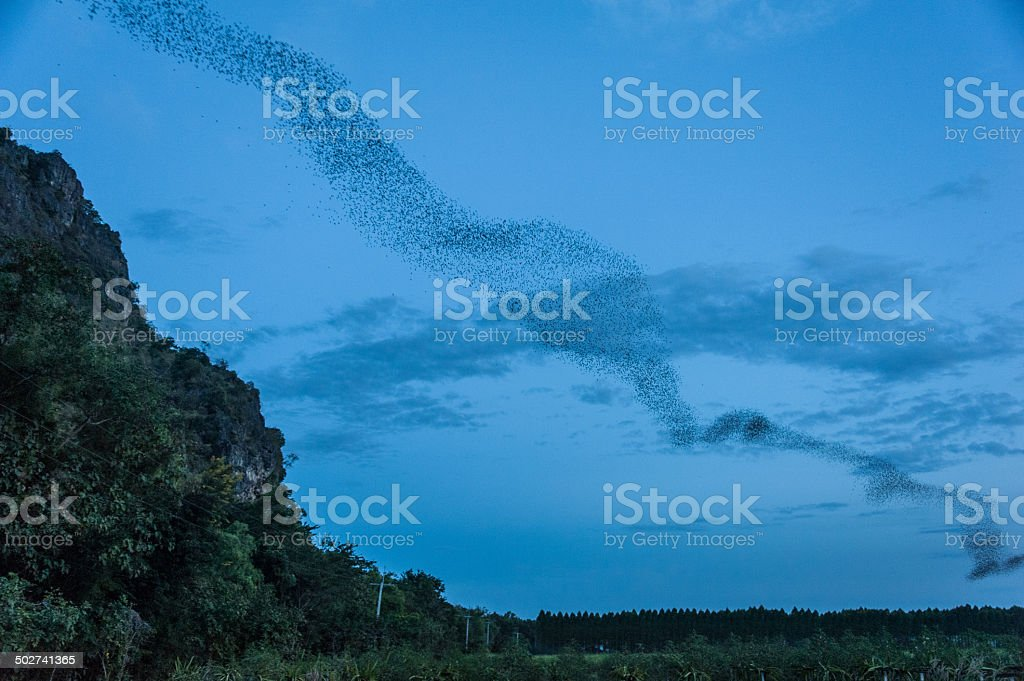 Bats out of the cave in Thailand stock photo