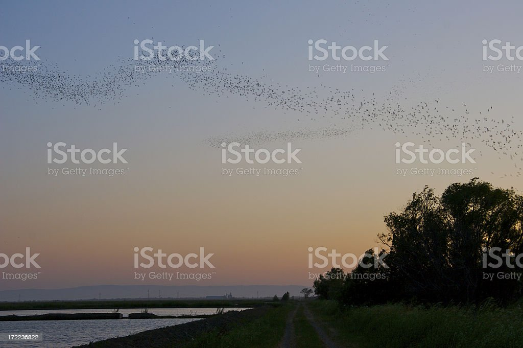 Bats take flight at dusk royalty-free stock photo