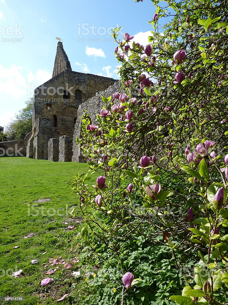 Battle Abbey & Magnolias royalty-free stock photo