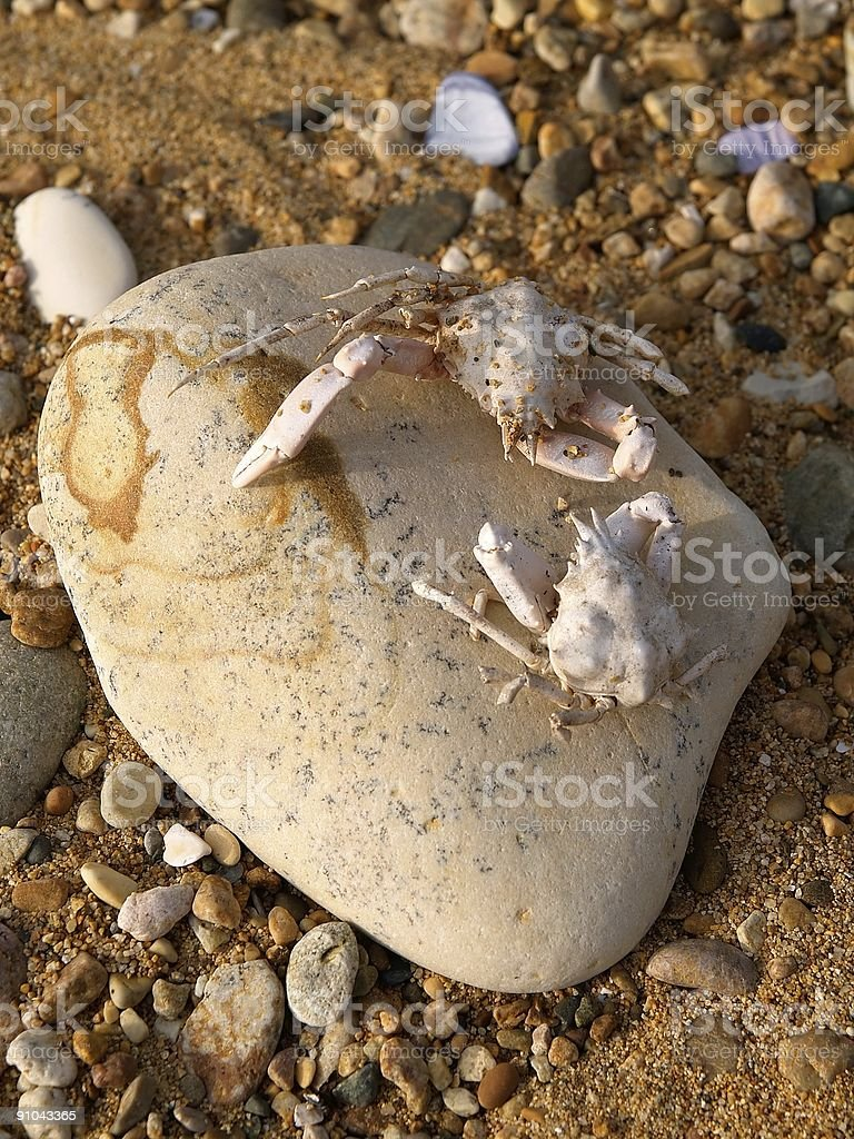 battle of crabs on the sea coast stock photo