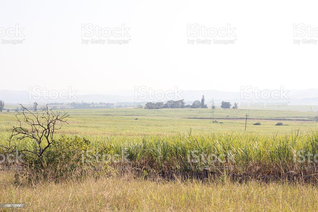 Battle of Gingindlovu in KwaZulu-Natal, South Africa royalty-free stock photo
