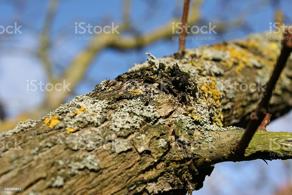 Baum im Frühling stock photo