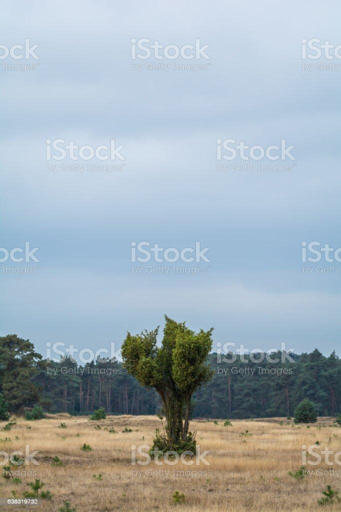 Baum in der Landschaft stock photo