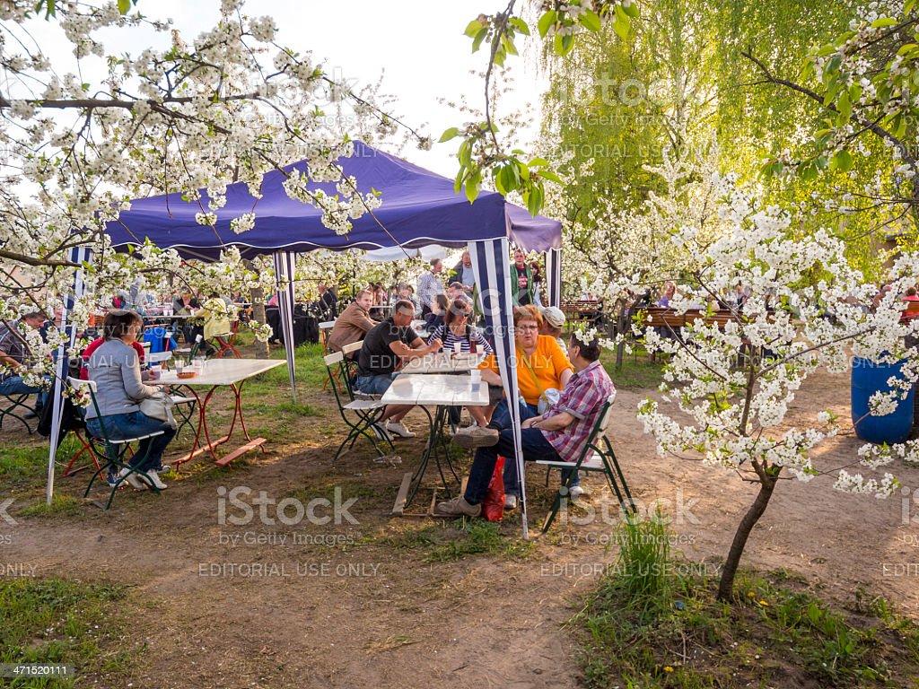 Baumbluetenfest in Werder near Berlin stock photo