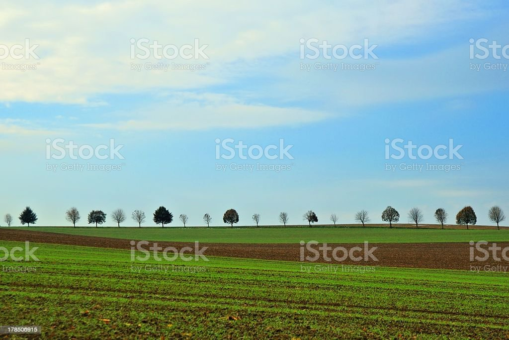 Baumreihe row of trees stock photo