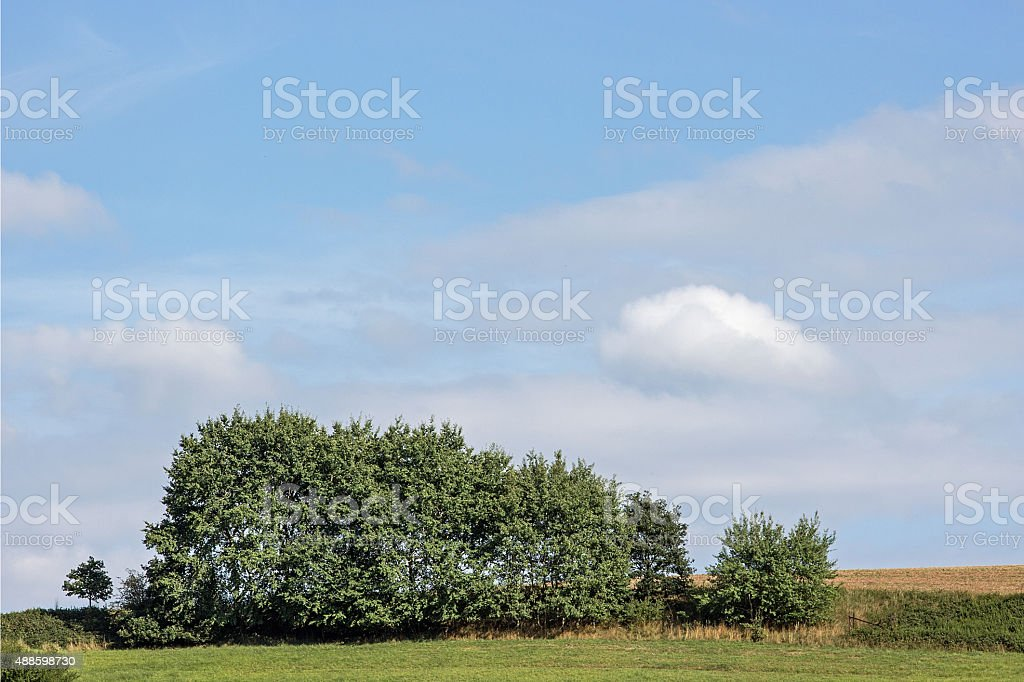 Baumreihe - Row of trees stock photo