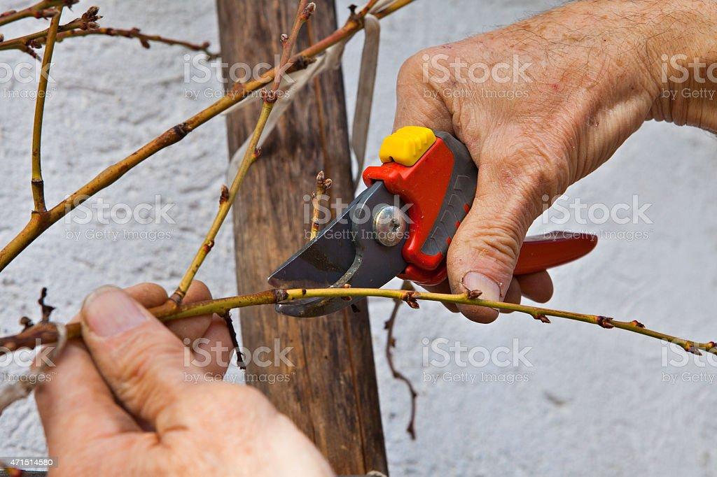 Baumschnitt im Garten stock photo