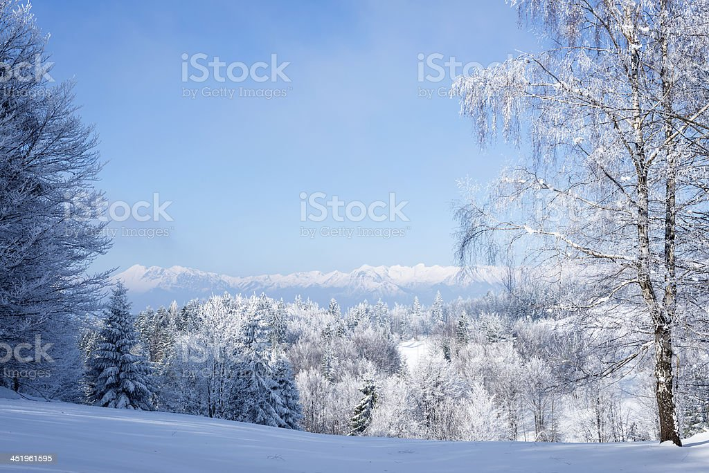 Bautiful Frosty Forest and Alps in Winter, Slovenia stock photo