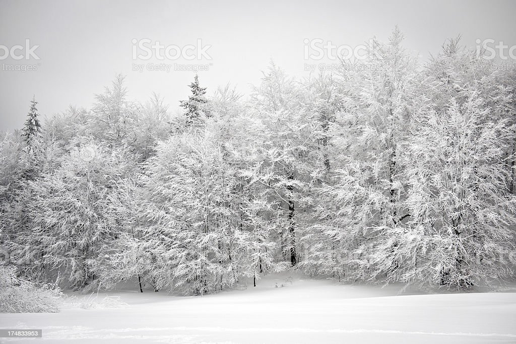 Bautiful Frosty Forest Winter in Slovenia Europe royalty-free stock photo