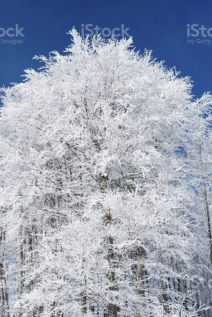 Bautiful Frosty Forest Winter in Slovenia, Europe stock photo