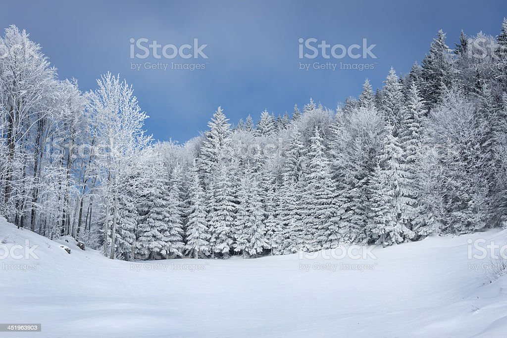 Bautiful Frosty Forest Winter in Slovenia stock photo