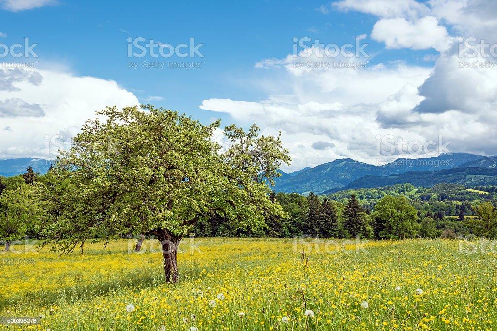 Bavaria landscape stock photo