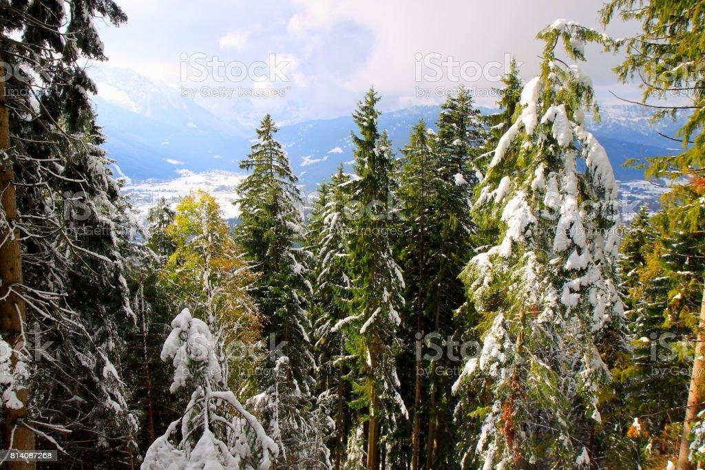Bavarian Alps, idyllic Pine trees woodland under snow landscape, majestic alps valley, dramatic Bavaria german Snowcapped mountain range panorama, Berchtesgaden alps, Germany stock photo