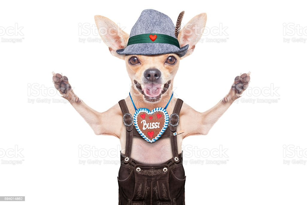 bavarian beer dog stock photo