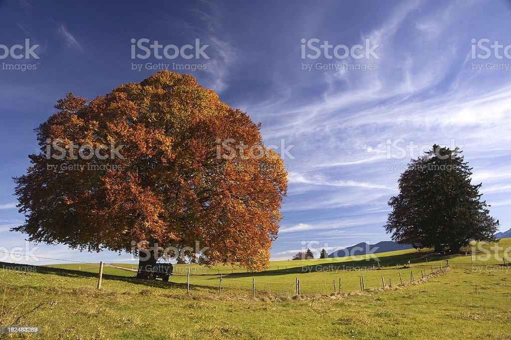 bavarian fall meadow royalty-free stock photo