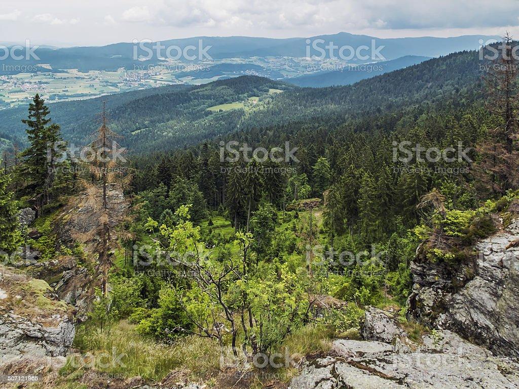 Bavarian Forest stock photo