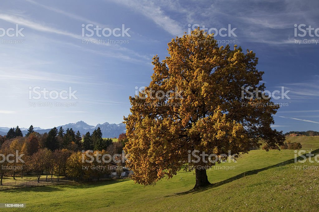bavarian meadow in autumn royalty-free stock photo