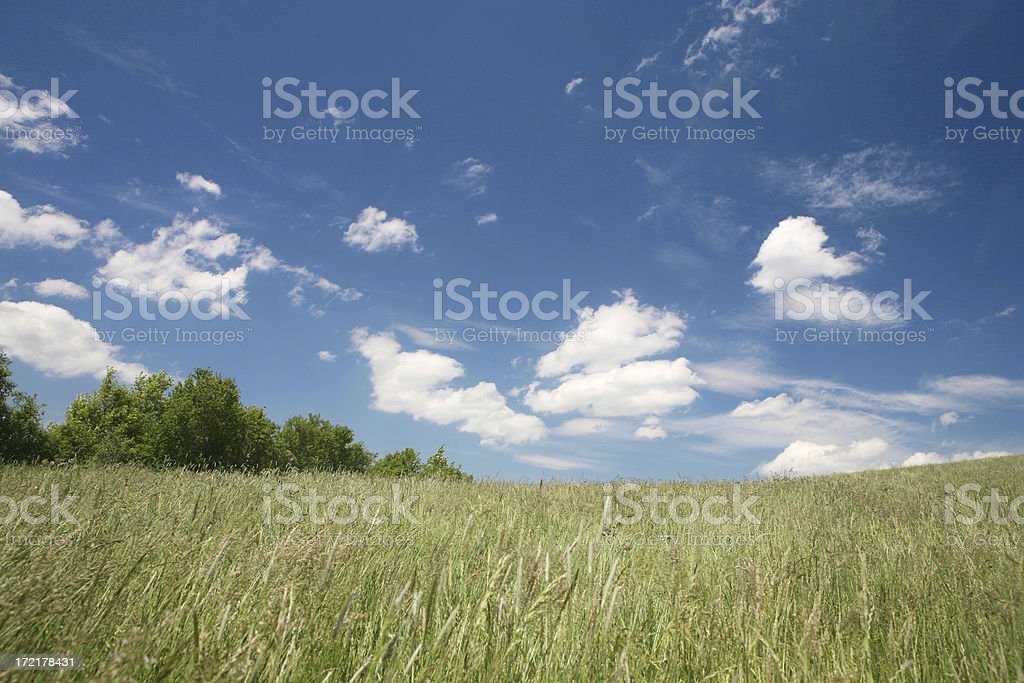 bavarian meadow in may royalty-free stock photo