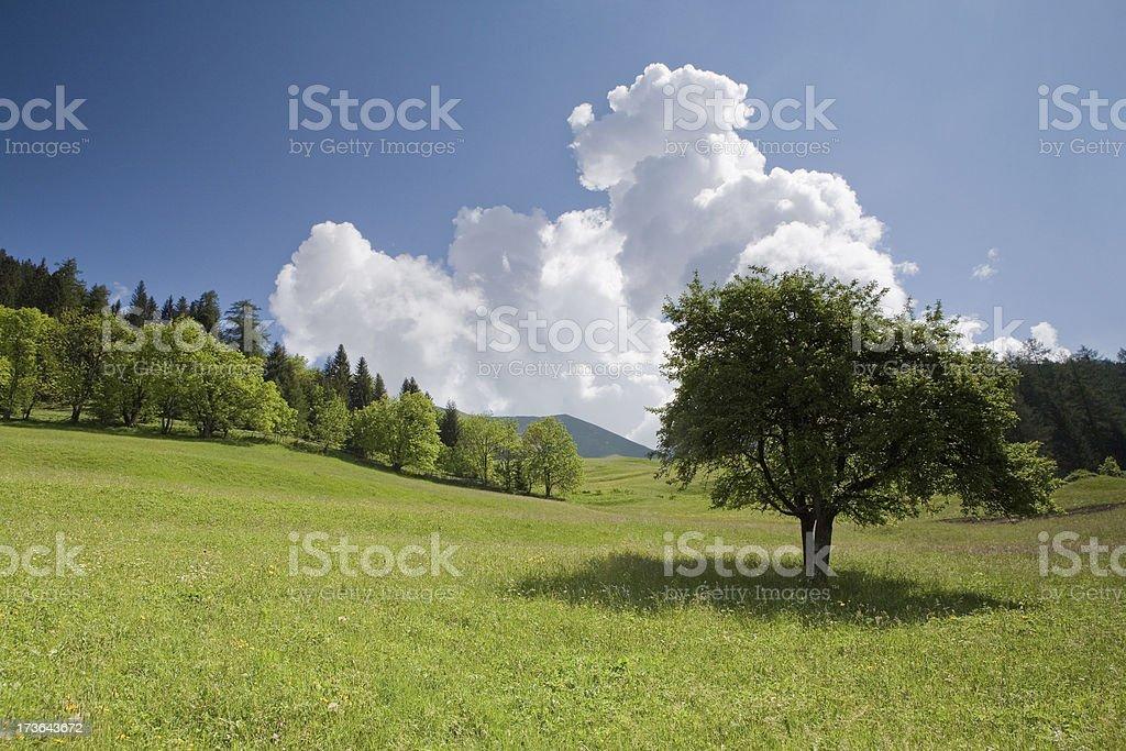 bavarian meadow- tree right royalty-free stock photo