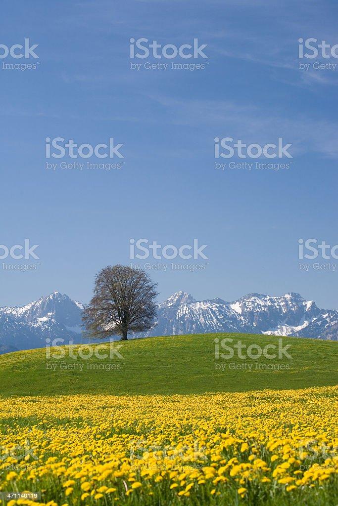 bavarian meadow - vertical germany stock photo