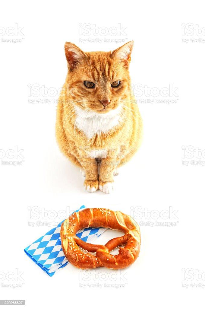 bavarian Pretzel and cat typical Oktoberfest food stock photo